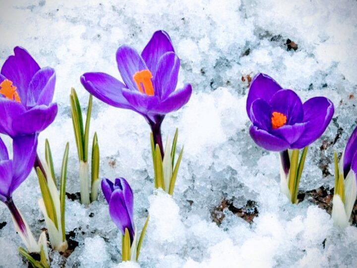 С праздником весны и красоты – Днем 8 Марта!